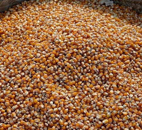 Podsumowanie tygodnia na giełdowym rynku zbóż (5-9.09.2016)