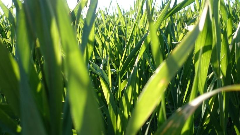 Rynek zbóż w kraju (12.04.2020)