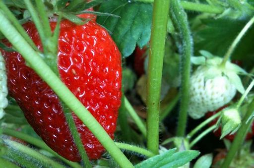 Copa i Cogeca apelują o wdrożenie nadzwyczajnych środków dla branży owocowo-warzywnej