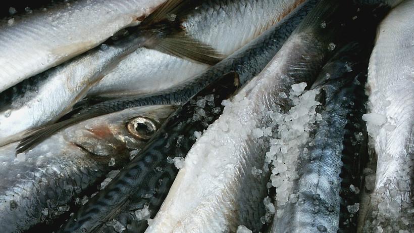 Ceny ryb, owoców morza i ich przetworów