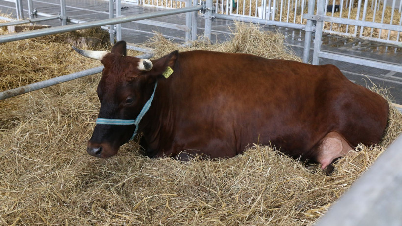 Ceny bydła rzeźnego w Unii Europejskiej