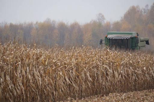 Notowania zbóż i oleistych. Wzrosty kontraktów na zamknięciu tygodnia (8.07.2016)