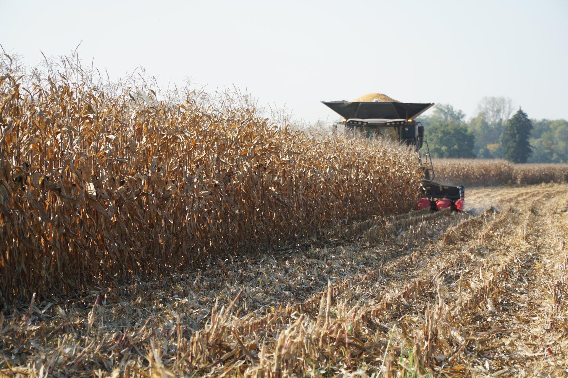 Rynek zbóż w kraju (14.10.2018)