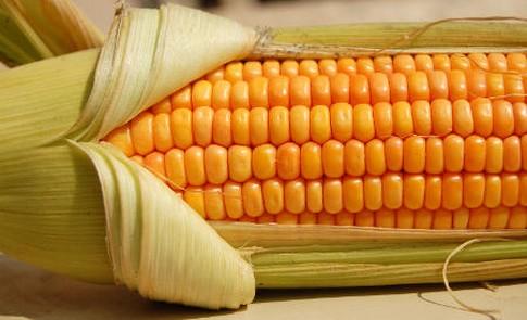 Kukurydza tanieje