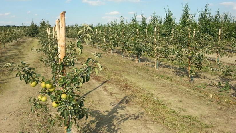 Ocena opłacalności produkcji rolniczej