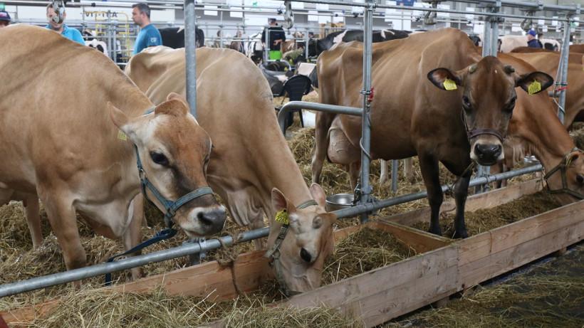 Ceny bydła na targowiskach (16.03.2018)