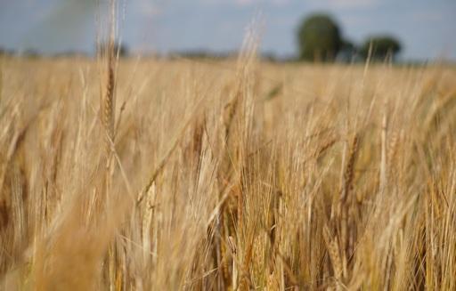 Ceny zbóż (20.12.2020)