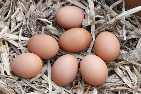 Ceny kurcząt całych i jaj konsumpcyjnych w UE i Polsce (17.10.2016)