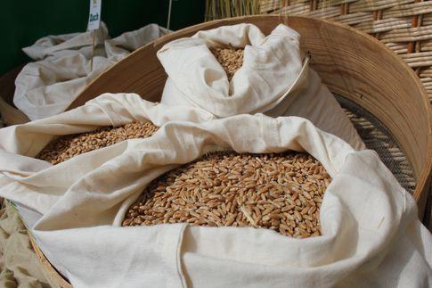 Notowania zbóż i oleistych. W ostatnich tygodniach największy wpływ na kontrakty mają dane eksportowe (27.10.2016)