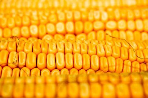 Notowania zbóż i oleistych. Piątek przyniósł odbicie notowań na giełdowym rynku zbóż i oleistych (20.06.2016)