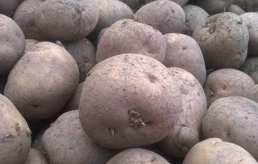 Ceny ziemniaków w Polsce (07.02.2021)