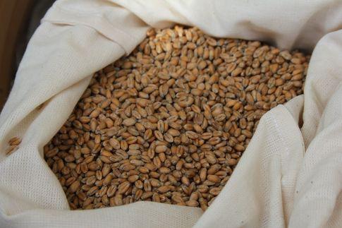 Ceny zbóż na giełdach towarowych (7.01.2018)
