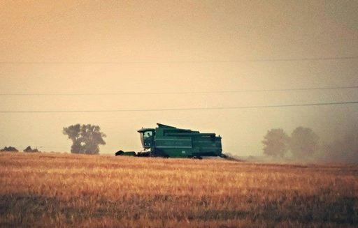 IERiGŻ: Zbiory zbóż będą oscylować w granicy 30 mln ton