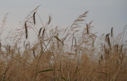 Ceny zbóż w Polsce na giełdach towarowych (08-14.09.2014)