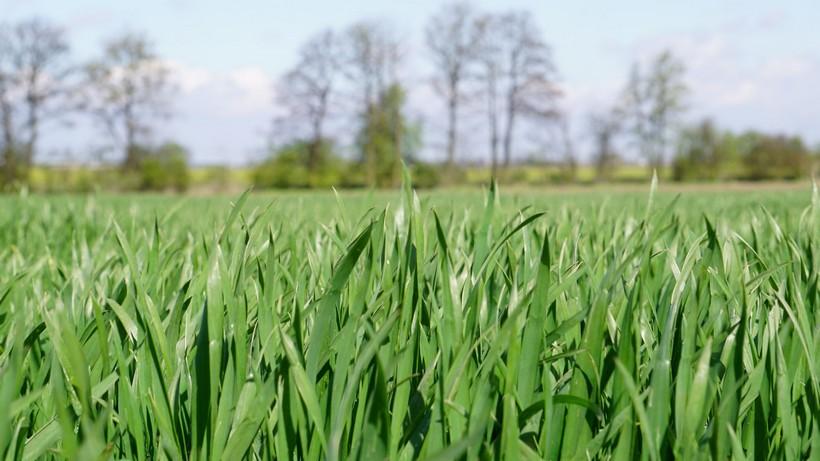 Na giełdowym rynku zbóż i oleistych widoczne było lekkie odreagowanie wcześniejszych spadków