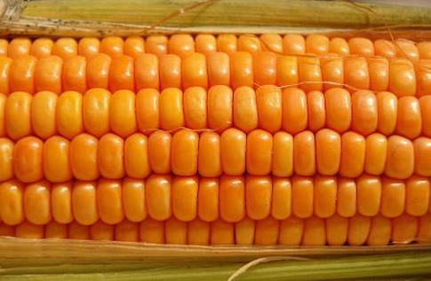 Ceny zbóż na giełdach towarowych (10.09.2017)