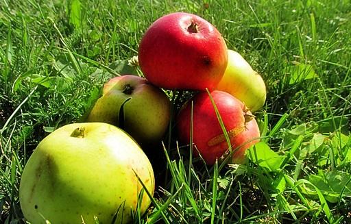 Ceny jabłek w Polsce (28.06.2016)
