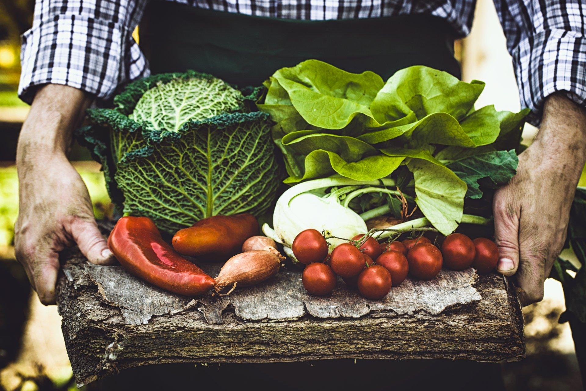 Wysoka podaż i niskie ceny młodych warzyw krajowych