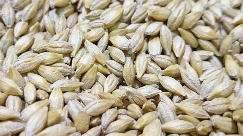 Ceny zbóż na giełdach towarowych (4.09.2016)