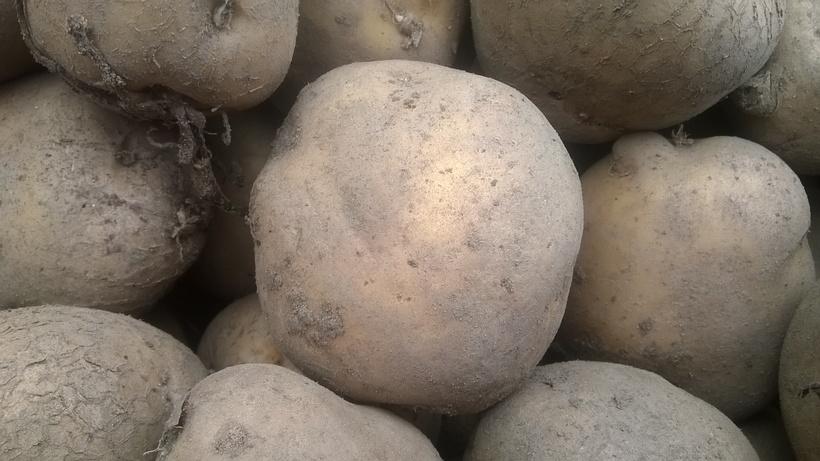 Ceny ziemniaków w Polsce (13.07.2017)