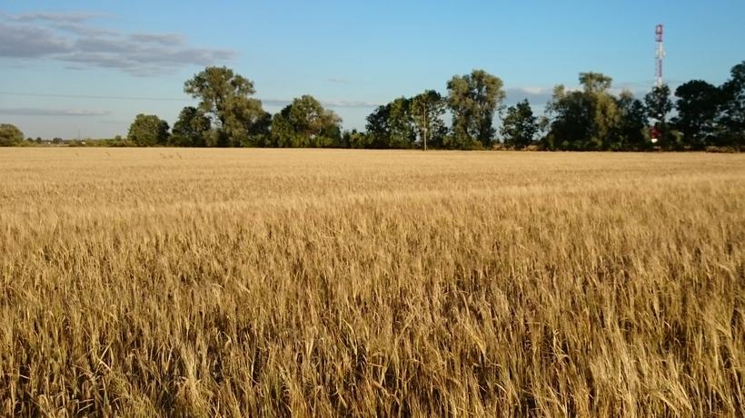 Ceny zbóż na giełdach towarowych (03.05.2020)
