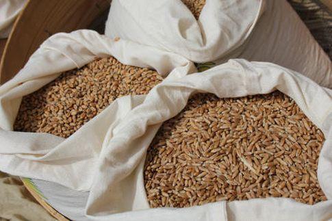 W skupie przeważały spadki cen zbóż (10.01.2016)