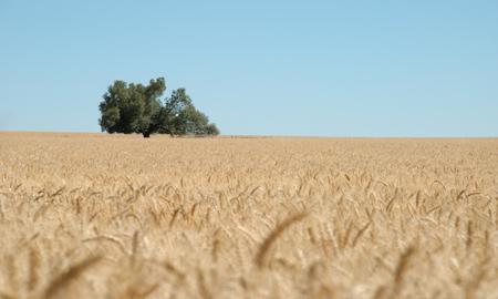 Ceny zbóż w kraju i portach (27.11.2014)