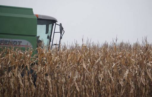 Notowania zbóż i oleistych w trendzie bocznym (28.09.2016)