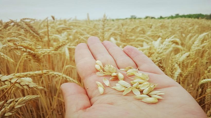 Rynek zbóż w kraju (28.02.2021)
