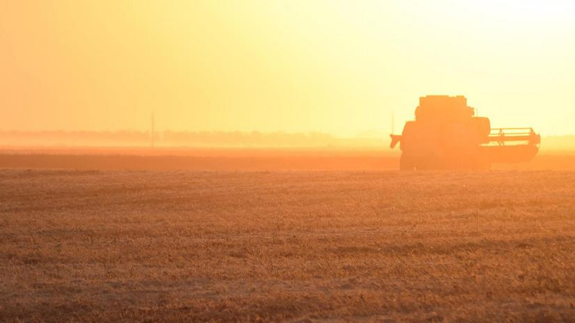 Notowania zbóż i oleistych. Soja zaliczyła czternastomiesięczne, a rzepak ośmiomiesięczne minimum (30.05.2017)