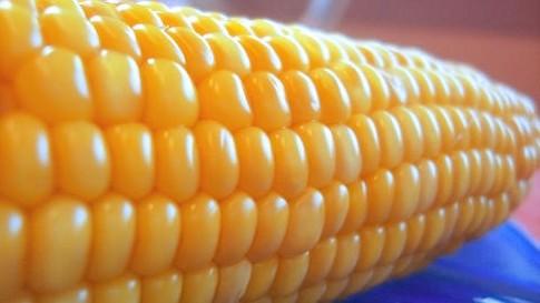 Rynek zbóż w kraju i na świecie (2.10.2016)