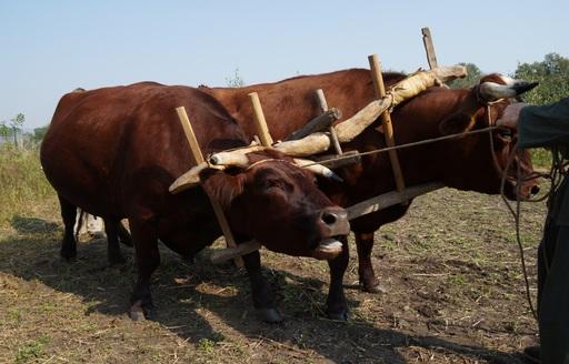 Rynek mięsa w Polsce (26.06.2016)