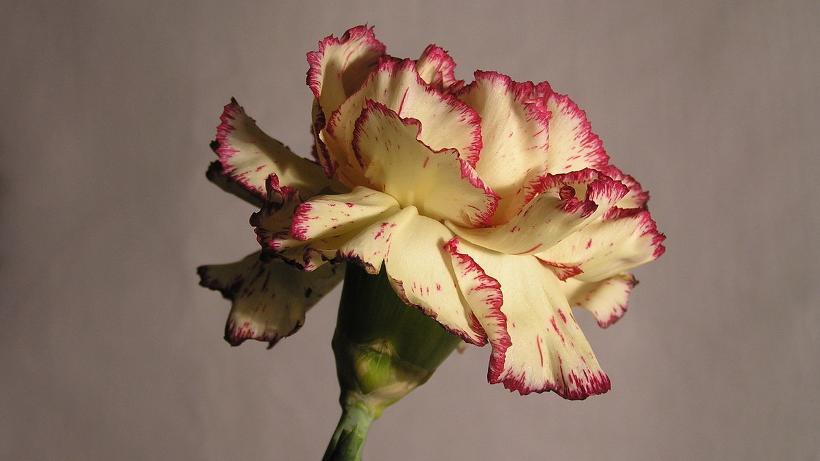 Kwiaty na Dzień Kobiet. Ceny kwiatów w Broniszach