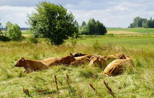 Rynek mięsa w Polsce (23.07.2017)