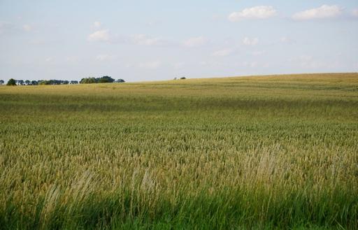 Ceny zbóż w Polsce na tle UE (5.06.2016)