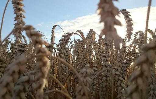 Rynek zbóż w kraju (21.10.2018)