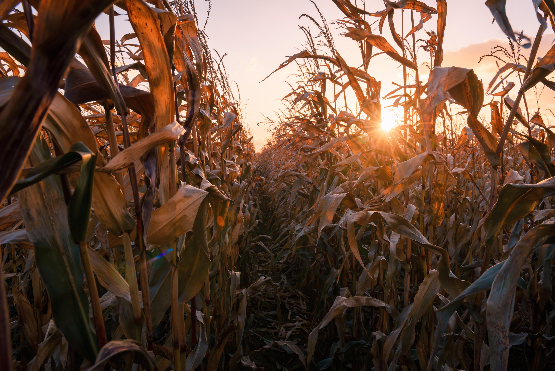 Ceny zbóż (02.05.2021)