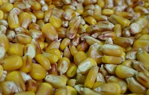 Ceny zbóż na giełdach towarowych (22.07.2018)