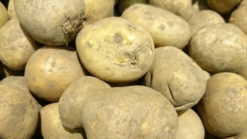 Ceny ziemniaków w Polsce (31.08.2017)