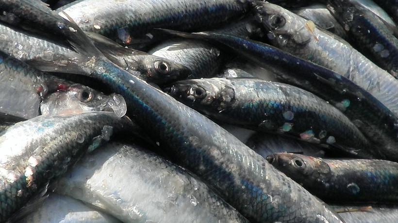 Handel rybami i ich produktami