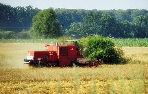Ceny zbóż i rzepaku w kraju i portach (11.09.2014)
