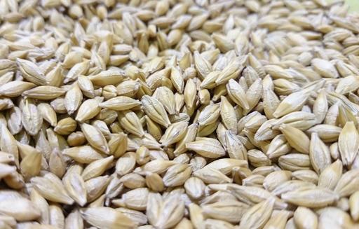 Ceny zbóż na giełdach towarowych (18.02.2018)