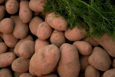Ceny ziemniaków spadły o połowę