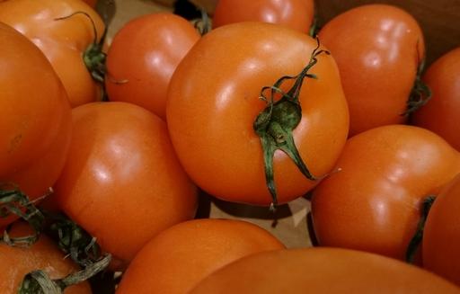 Prognozy produkcji pomidorów