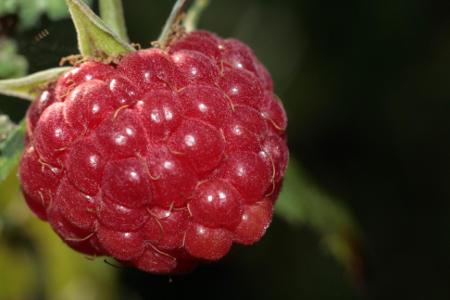 Ceny owoców w Polsce (09.08.2016)