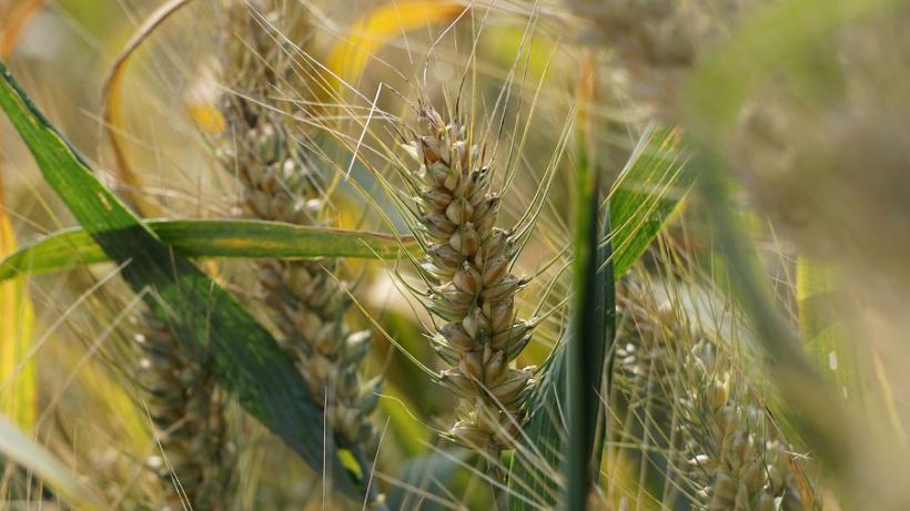 Rynek zbóż w kraju (14.05.2017)
